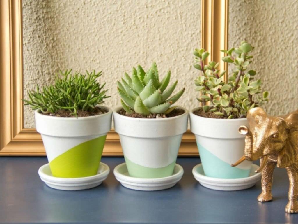 tanaman hias untuk meja kerja