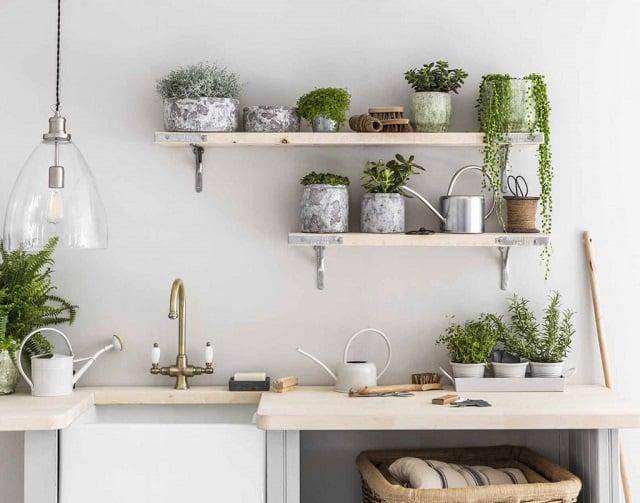 tanaman hias indoor dapur