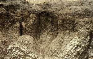 cara menyuburkan tanah