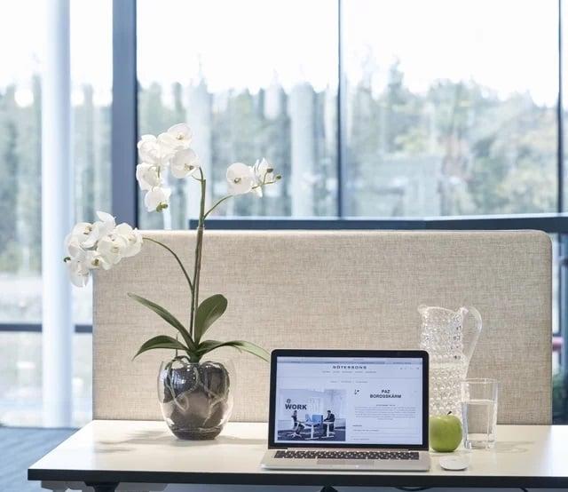 tanaman anggrek untuk meja kerja