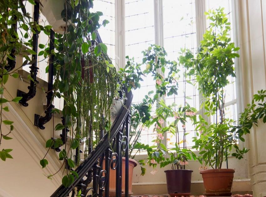 dekorasi tanaman hias interior rumah