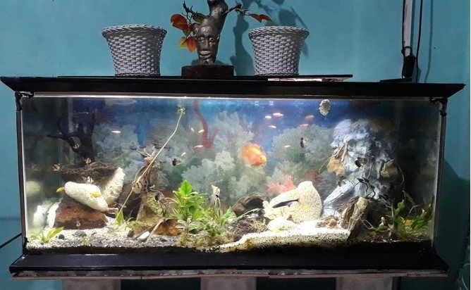akuarium ikan hias ukuran besar