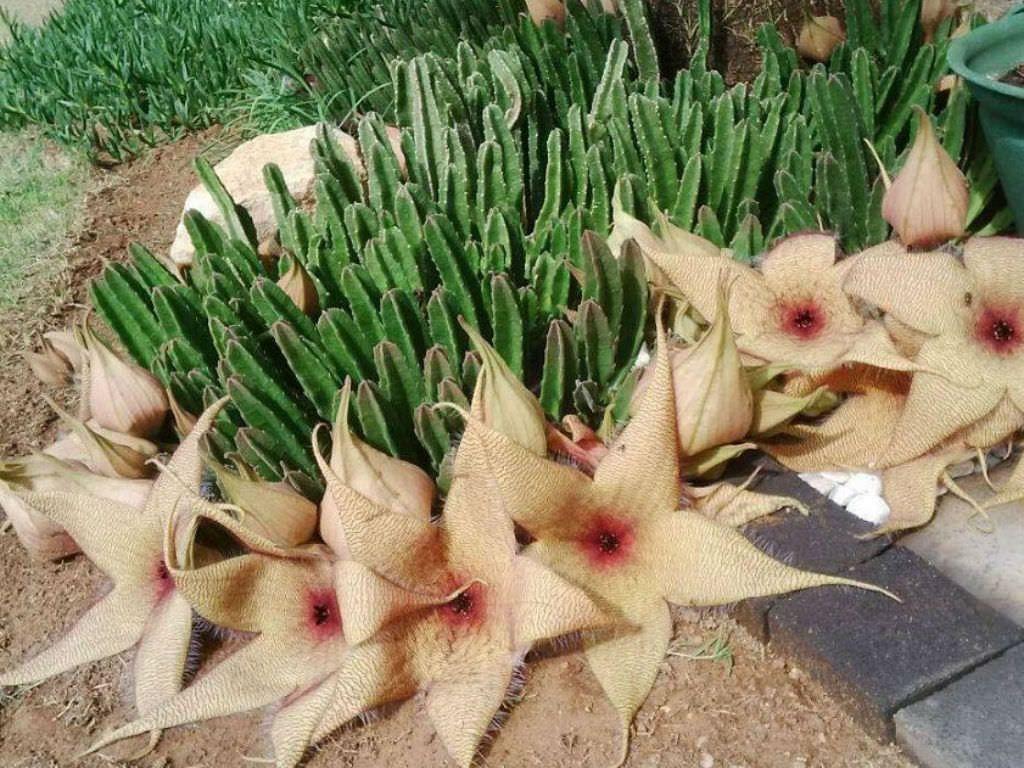 jenis bunga hias