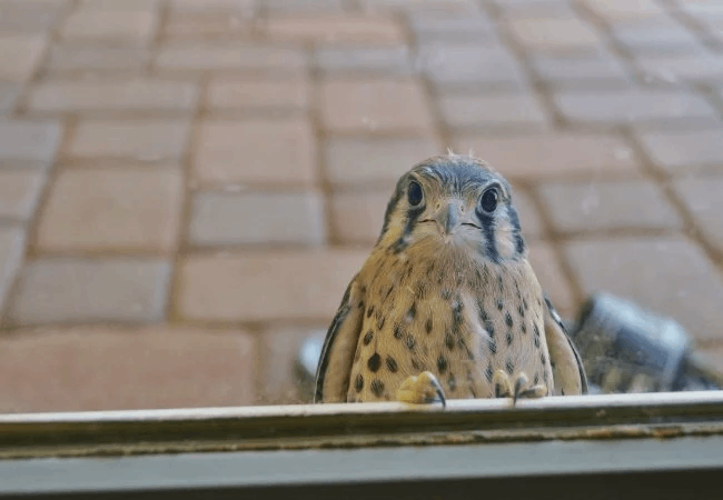 pertanda burung masuk rumah