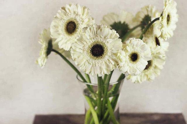 bunga herbras