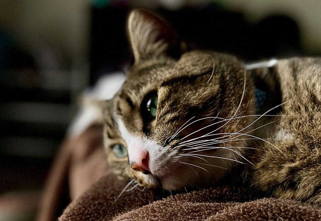 gambar kucing menyendiri