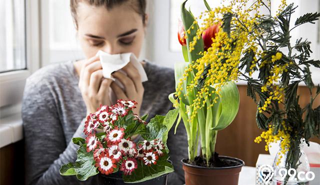 Jenis Tanaman Hias yang Aman Bagi Penderita Alergi