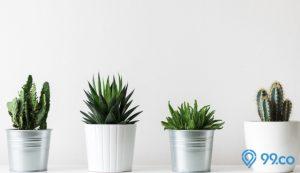 jenis kaktus