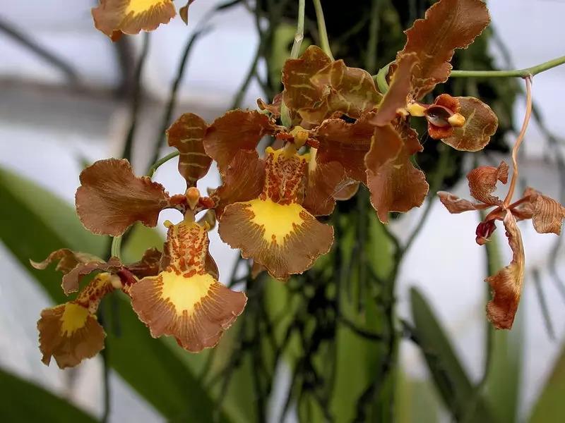 7 Jenis Bunga Anggrek Terindah Di Dunia Layaknya Bunga Surga
