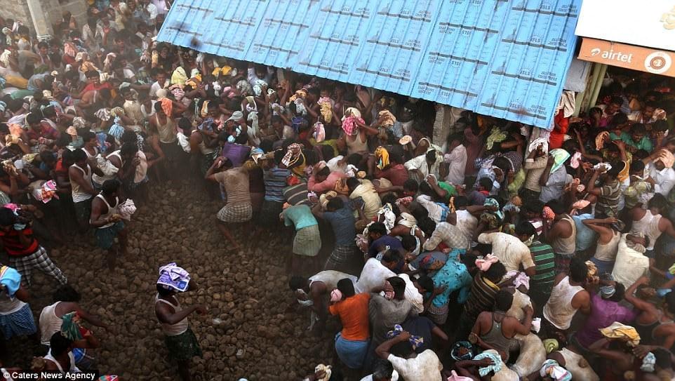 Uniknya Perang Pidakala, Festival Melempar Kotoran Sapi Tahunan di India