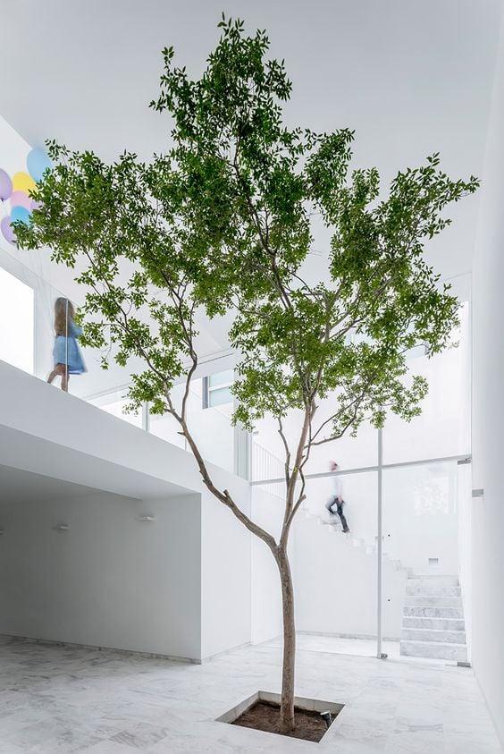 Pohon di dalam Rumah