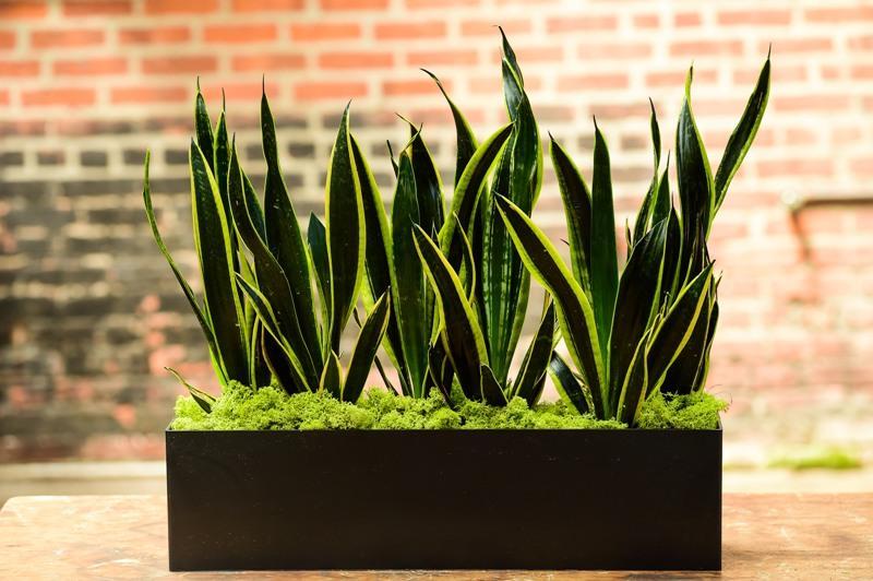 tanaman gaib pembawa rezeki
