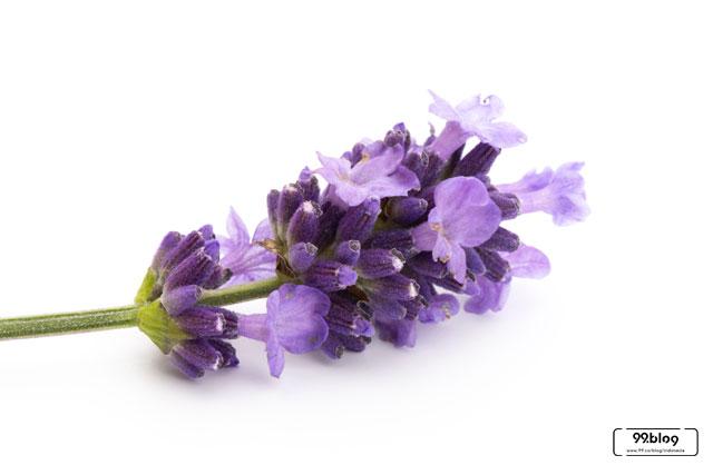 bunga pengharum ruangan