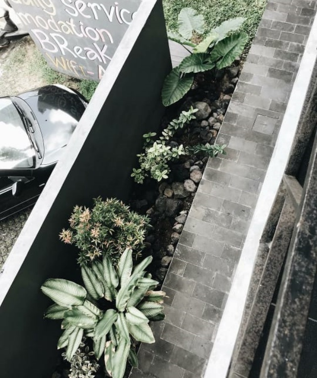 tanaman di hotel thomas djorghi