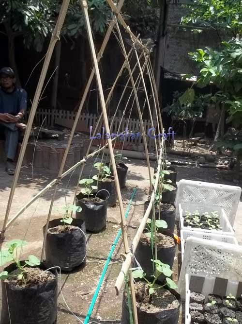 ajir bambu