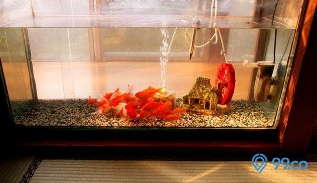 7 Kelebihan Kekurangan Aquarium Akrilik Lebih Jernih Daripada Kaca