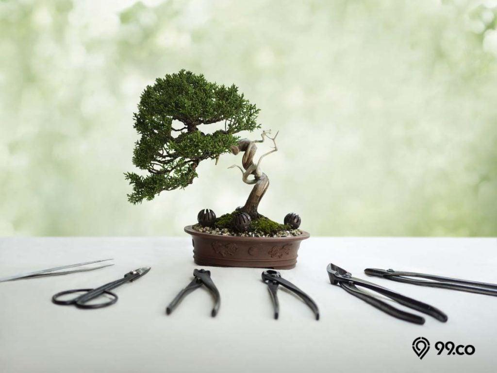 alat mengurus bonsai