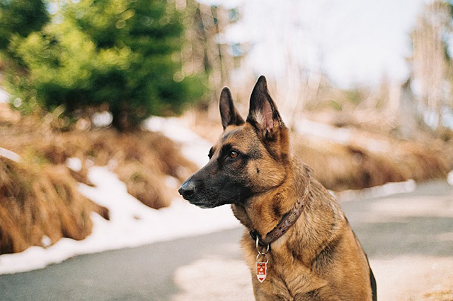 anjing termahal di dunia