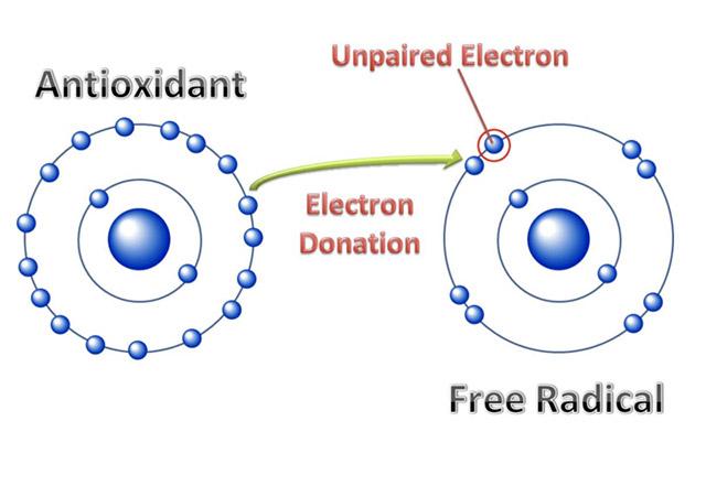 struktur antioksidan radikal bebas