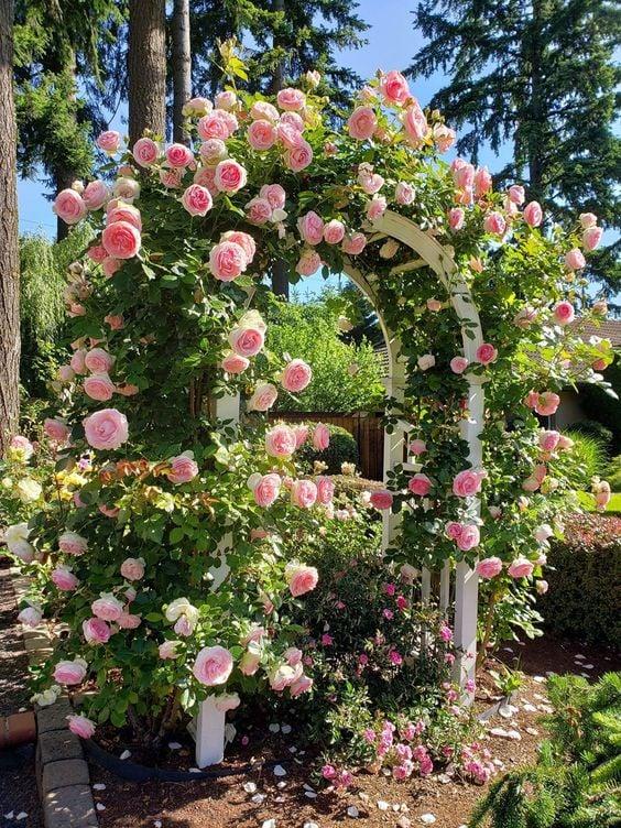 archways tanaman bunga