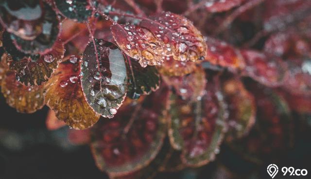 aroma petrichor bau hujan