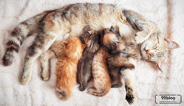 arti kucing melahirkan di rumah kita