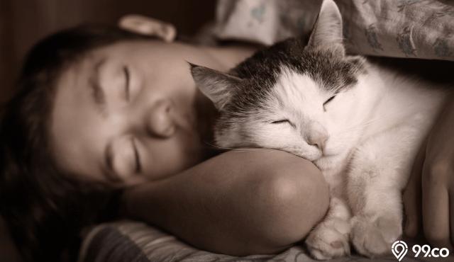 33 Arti Mimpi Kucing yang Menandakan Kebaikan dan Keburukan. Sudah Tahu?
