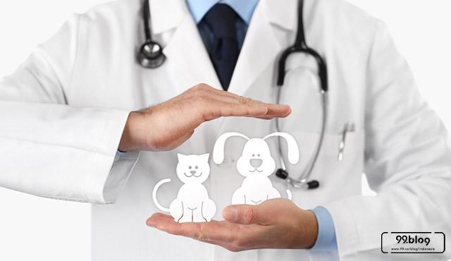 asuransi hewan