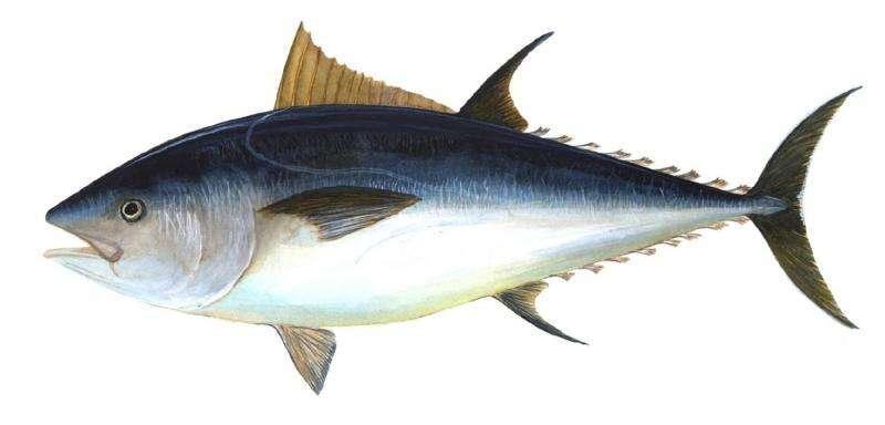 jenis ikan