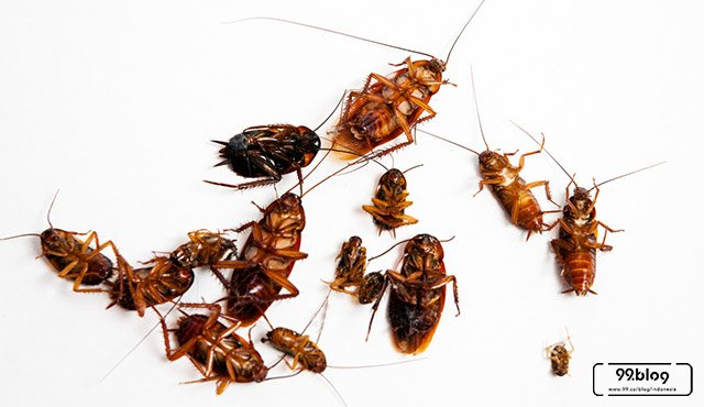 11 Hal Penyebab Banyak Kecoa di Rumah | Plus Cara Ampuh Mengusirnya