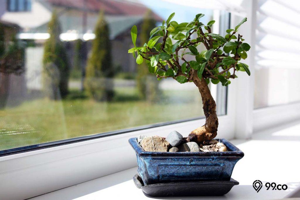 pohon pembersih udara