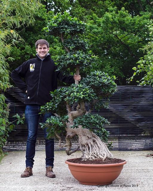 bonsai tua mahal