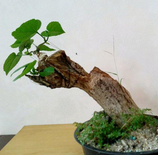 bonsai tanaman liar