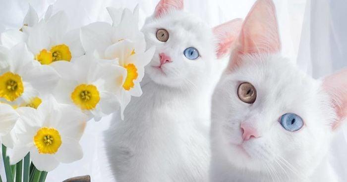 kucing kembar lucu