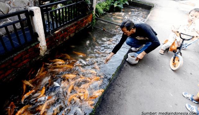 5 Desa yang Sukses dari Budidaya Ikan di Selokan. Untungnya Sampai Ratusan Juta, Lo!