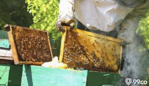 budidaya lebah madu untuk pemula