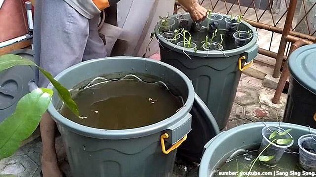 Budikdamber Teknik Budidaya Ikan Dan Sayuran Belajar Yuk
