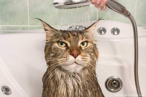 7 Penyebab Bulu Kucing Rontok Cara Mengatasinya