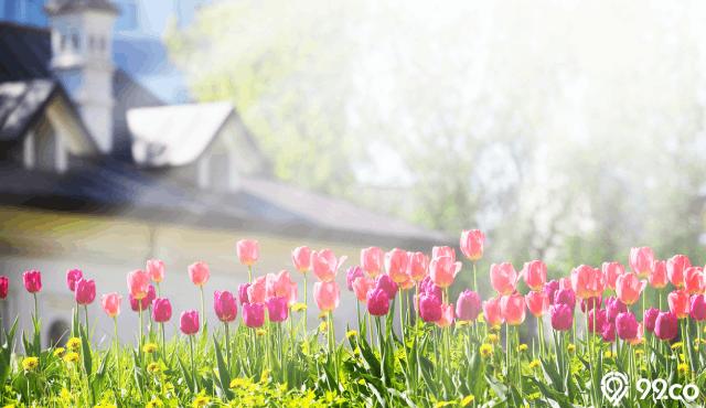 bunga depan halaman rumah