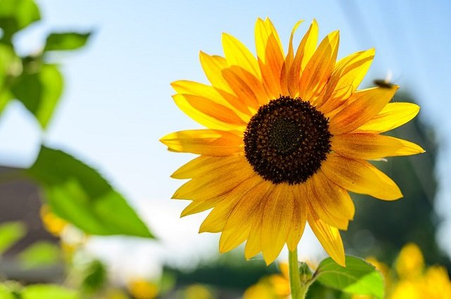 Tanaman Bunga Ini Bisa Mengundang Lebah Kupu Kupu Apa Saja