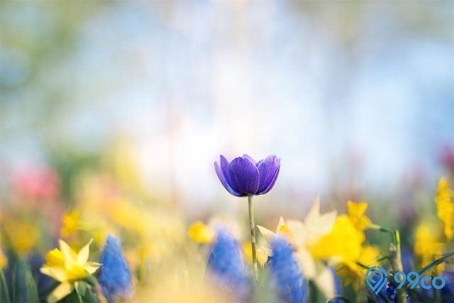 Bagian Bagian Bunga Dan Fungsinya Pada Tumbuhan Sudah Tahu