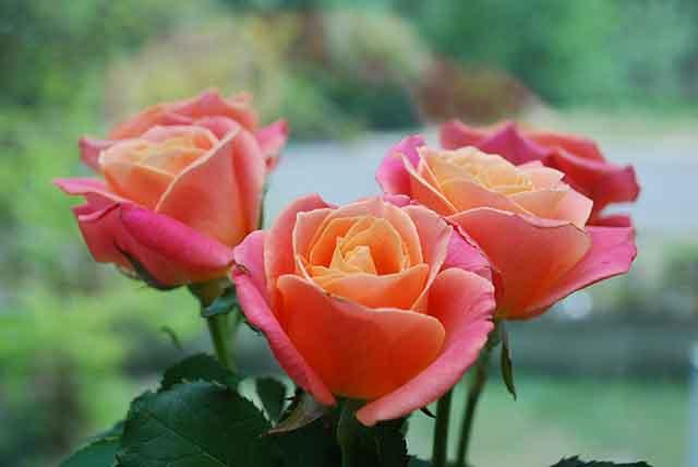 13 Bunga Yang Bisa Dimakan Baik Untuk Kesehatan Kulit Tubuh