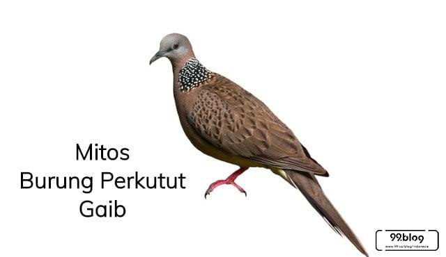 7 Mitos Burung Perkutut Gaib | Sumber Keberuntungan Juga Malapetaka