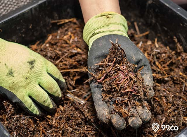 manfaat cacing tanah untuk kesuburan kebun