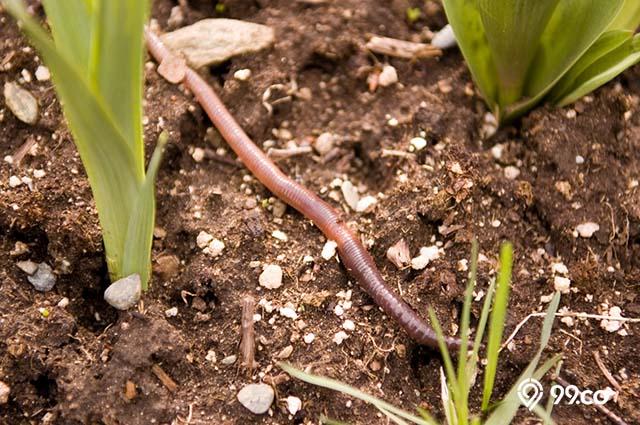 meningkatkan nutrisi dalam tanah