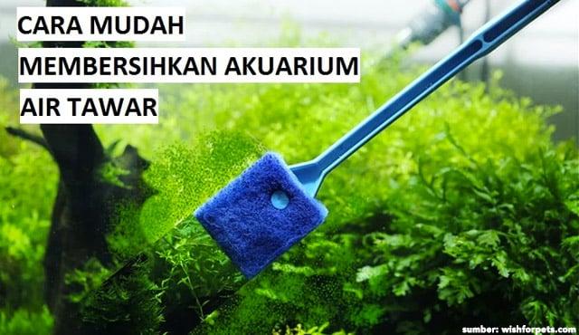 6 Cara Membersihkan Akuarium Air Tawar dari Kerak & Kotoran