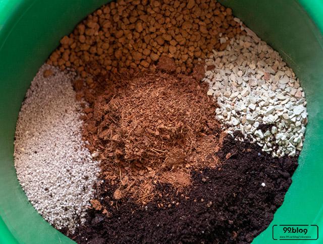 Cara Membuat Bonsai Kelapa Di Rumah Hasilnya Indah