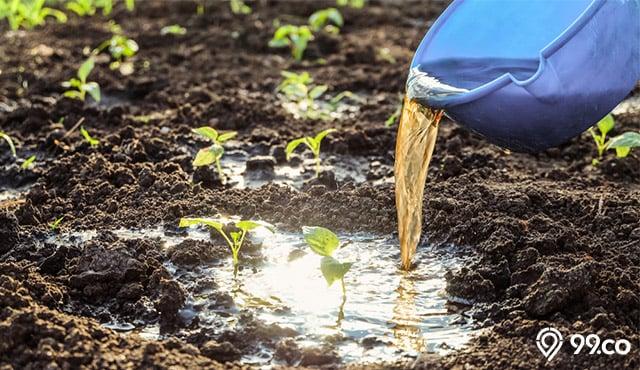 pupuk cair untuk tanaman