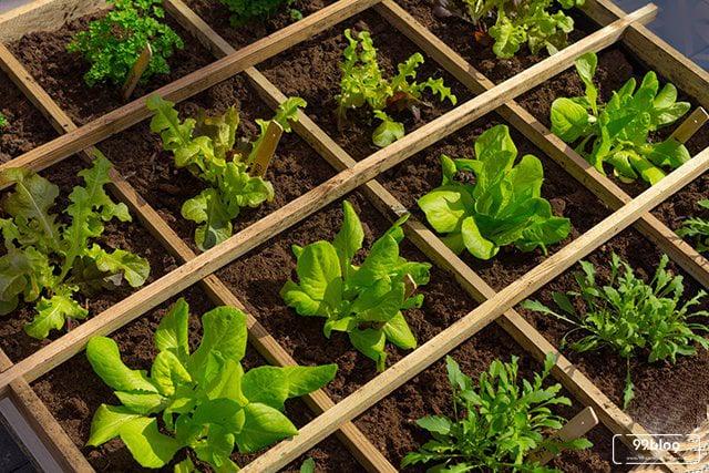 cara membuat kebun Minimalis