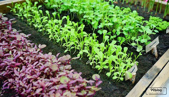 Cara Membuat Kebun Minimalis 1 M Di Rumah Desain Bibit Pilihan